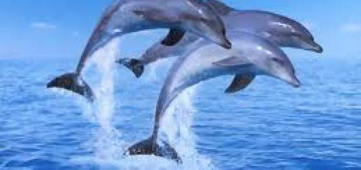 Yunusların İntihar Ettiğini Biliyor Muydunuz?
